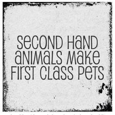second class animals make first class pets