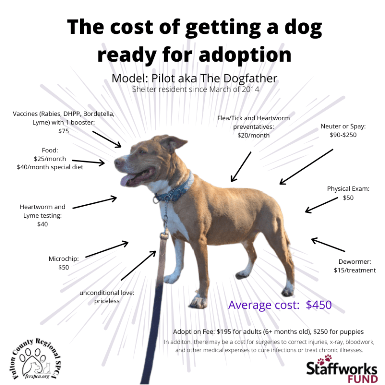 adopt a shelter pet cost of vetting