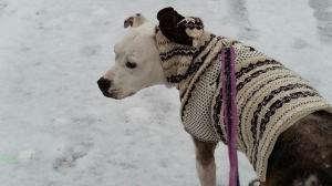 Daisy on a Walk